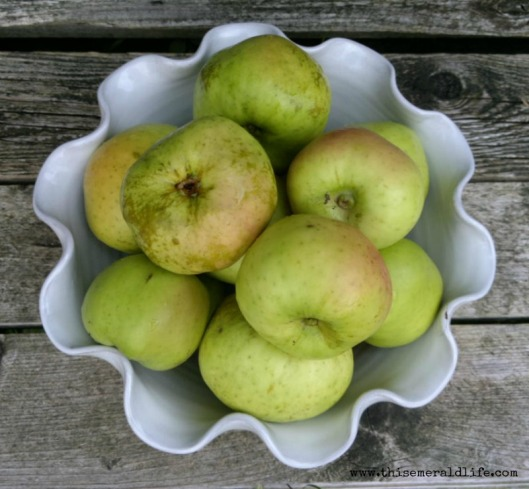Native Irish Apples